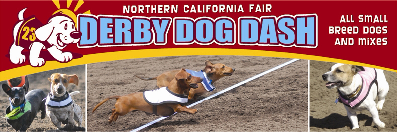 derby-dog-header